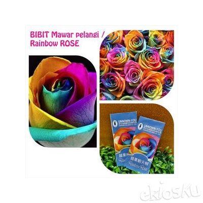 Bibit Mawar Rainbow